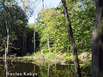 Голосіївський ліс