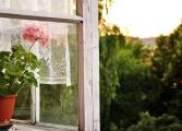 Rivne, Ukraine Lonely Life of flower behind a glass ...