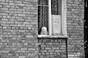 Kyiv, Ukraine White cat in the window