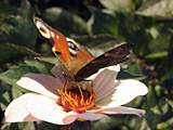 Butterfly in a flower